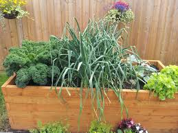 Small Picture 14 vegetables to grow in a small gardenGreenside Up