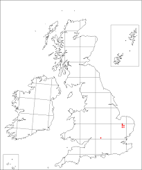Veronica praecox   Online Atlas of the British and Irish Flora