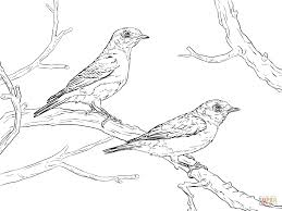 Eastern Bluebird Pair Coloring Pages Png