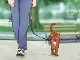 how to keep a cat from running out the door