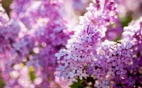 Весна сочинение на английском Сочинение на  Перевод Весна