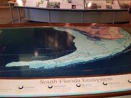 welcome to the florida keys eco discovery center john parce real stretching from the treasure coast to the florida keys key west and the dry tortugas florida coral reefs offer water enthusiasts of all ages the