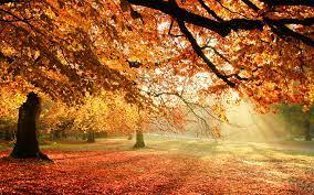 Autumn trees, Nature wallpaper ...
