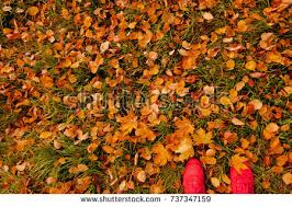 grass field from above. Pair Of Sneakers With Autumn Leaves On Green Grass Field, View From Above Field