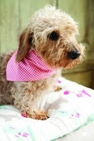 free and easy dog bandana pattern to sew ideas sewandso