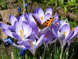 Die schönsten Frühlingsbilder | wetter.de