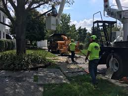 image may contain one or more people tree plant and outdoor robs tree service e61