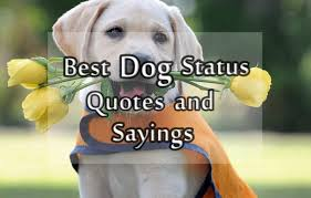 Cute Dog Quotes 31 Wonderful Dog Status Messages And Quotes About Dog For Facebook And Whatsapp