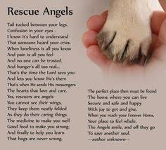 animal rescue quotes and sayings. Modren And Rescue A Shelter Dog Today You Are Their Only Hope Their Sad Faces Cry For Animal Quotes And Sayings