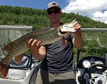 Musky Length Weight Chart Tiger Muskellunge Wikipedia