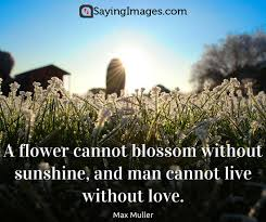 Beautiful Quotes On Life And Love