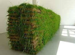 green wall retaining wall backyard