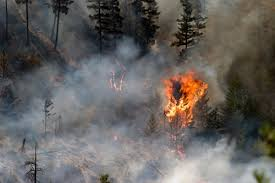Why do you need csaa insurance exchange? Wildfire Victims Sue Insurer For Woefully Underinsuring Them Insurance Business