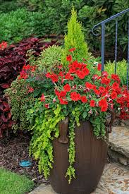 Potted Plants  Potted Plant Ideas Full Sun In Plants  Flowers Container Garden Ideas Full Sun