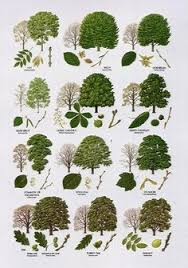 41 Best AP BioLeaf Collection Images On Pinterest  The Common Fruit Tree Leaf Identification