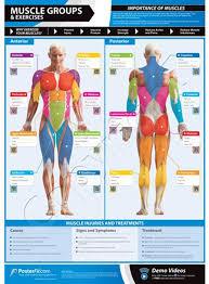 Amazon Com Sportsgear Us Posterfit Gym Fitness Strength