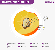 Fruits Formation Parts And Different Types Of Fruits
