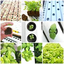 growth in the hydroponics food industry set to outpace global markets by 80