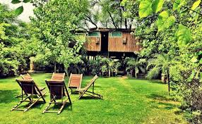 tree house jaipur. Tree House Jaipur O