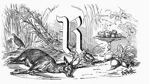 食材 ローマ字 アルファベットのr 鹿肉の画像素材18603416