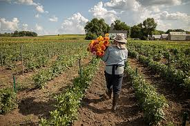 a woman walking in a field holding flowers