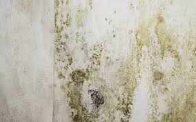 Green Mould On Wall