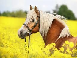 Horse Wallpapers For Desktop Picseriocom