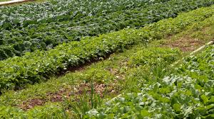 Crop Rotation Chart Vegetable Gardening A Quick Guide To Crop Rotation Vegetable Families