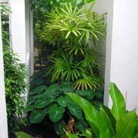 Small Picture Suzan Quigg Landscape Design Cairns and North Queensland