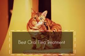 best flea treatment for cats header