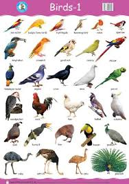 Birds Chart For Kindergarten Image Result For Birds With Names Animals Name In English