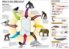 Animal Speed Chart Data Chart Humans Vs Animals Infographic Infographic