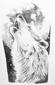howling wolf drawing tattoo. Brilliant Howling Wolf Howling Sketch In Howling Wolf Drawing Tattoo L