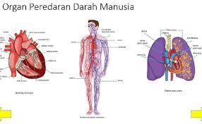 Sumber soal berasal dari buku siswa kurikulum 2013 kelas 123456 semester 1 dan semester 2. Soal Ipa Sistem Peredaran Darah Pada Manusia Kelas 5 Sd Dunia Belajar
