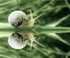 55 Best <b>Snails</b> Are <b>Beautiful</b>!! images   <b>Snail</b>, Animals <b>beautiful</b> ...