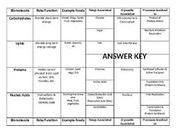 Biomolecules Chart Worksheets Teaching Resources Tpt