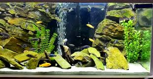 Best Cichlid Food For Color Growth 2019 Our Top 5 Picks