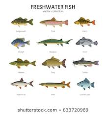 Freshwater Fish Identification Chart