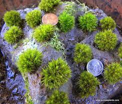 Live Moss Facts \u0026 Questions