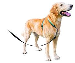 Petsafe 3in1 Harness From The Makers Of The Easy Walk Harness