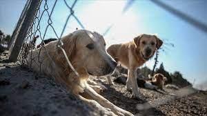 Hayvanları Koruma Kanunu ve 4. Yargı Paketi Meclis'te - Haber Nix | Haber,  Güncel Haberler, Gündelik Son Haberler