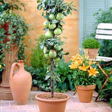 PreDesigned Plant Packages  Native Foods NurseryMedley Fruit Tree