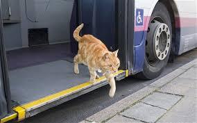 Imagini pentru pets in buses