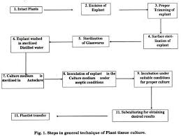 essay on plant tissue culture history methods and application step in general technique of plant tissue culture