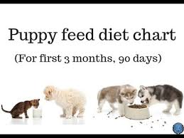 Pet Care Puppy Feed Diet Chart For First 3 Month 90 Days Bhola Shola