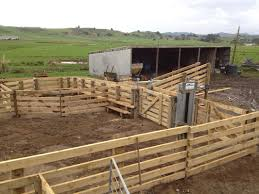 wooden farm fence. Cattle Yards For A Medium To Small Sized Dairy Farm. Wooden Farm Fence
