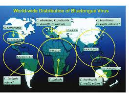Bluetounge Virus The Worldwide Distribution Of Bluetongue Virus Btv Serotypes And
