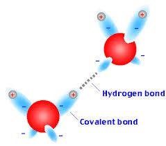 Hydrogen Bonding Structure Function Bioinformatics