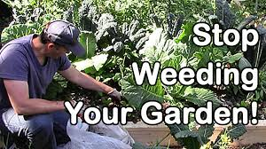 Stop Weeding Your Garden! - YouTube