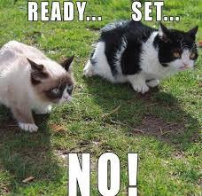 grumpy cat quotes frozen. Perfect Quotes Top 40 Funny Grumpy Cat Pictures Funniest Quotes To Cat Quotes Frozen A